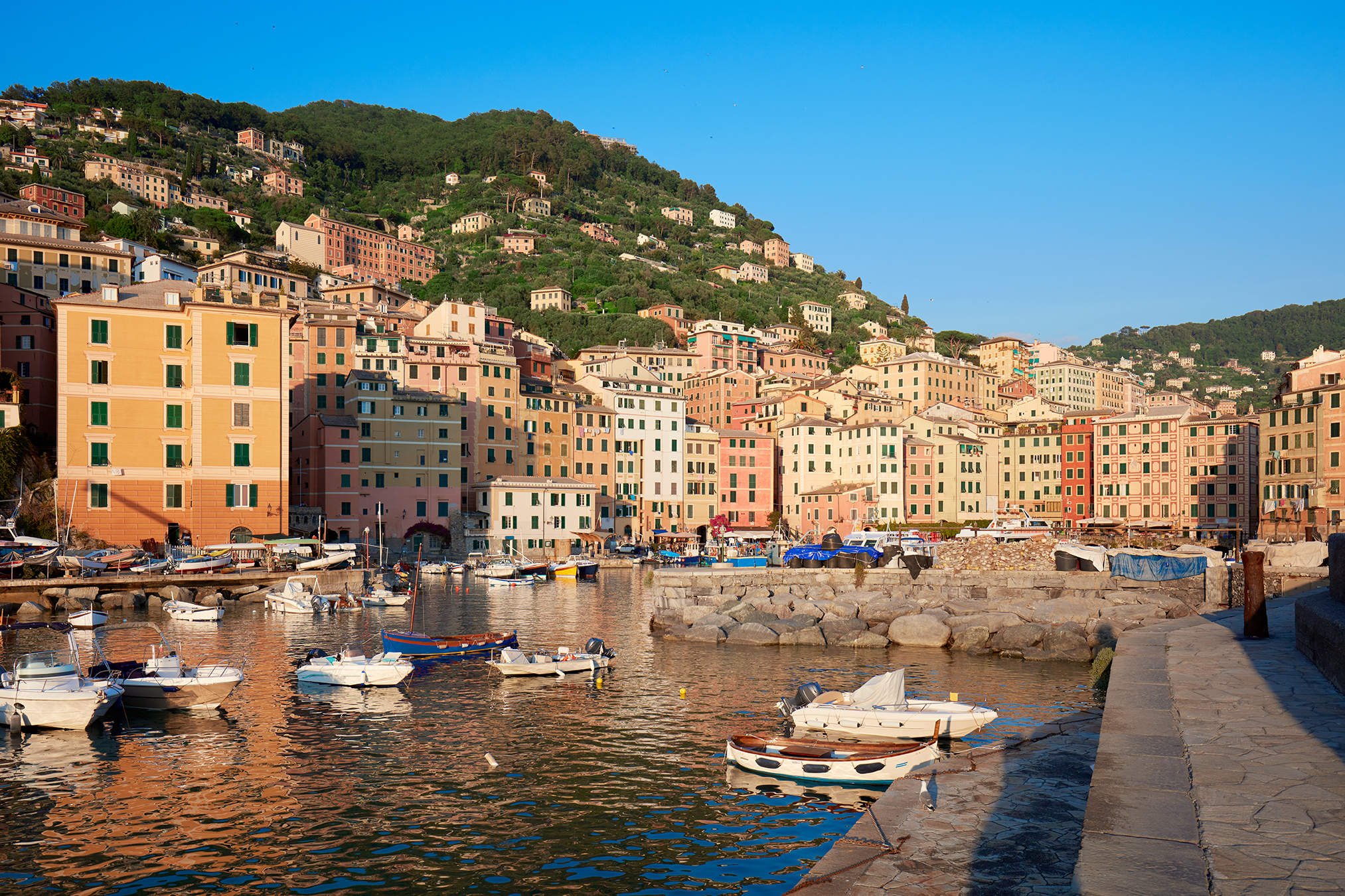 Camogli typical village with colorful houses and small harbor bay in Italy, Liguria in a sunny day